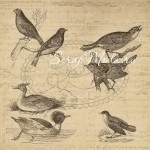 Бумага односторонняя Птички 1229, Ogrod 1, 150x150 мм, 200г/м2, Galeria Papieru