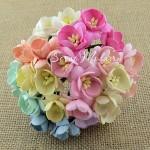 Цветы Вишни MIX-Shabby с тычинками, 25 мм., 5 шт., UC002074