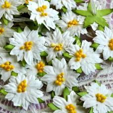 Пуансетия белая, с жёлтыми тычинками,  30 мм., 1 шт., UC002604